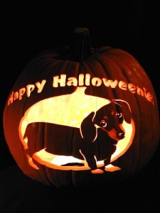 dog-dach-HppyHallownie (2.5)_____